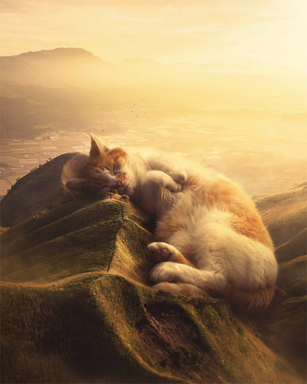 cat as landscape photo