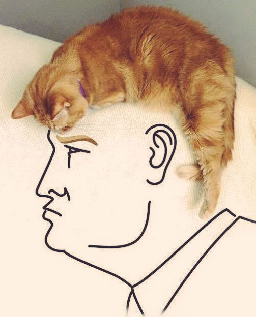 trump with cat for hair art