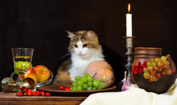 cat at table full of food