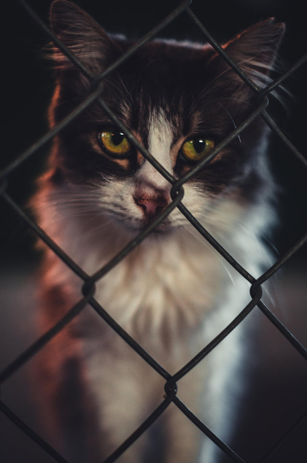 cat behind fence
