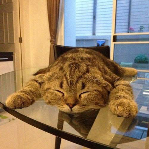 cat sleeping on glass table top