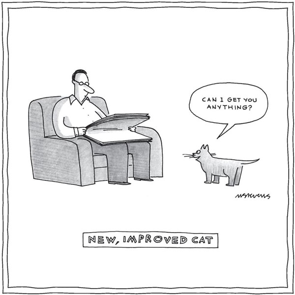the new and improved cat comic