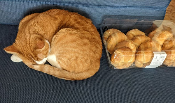 cat and croissants