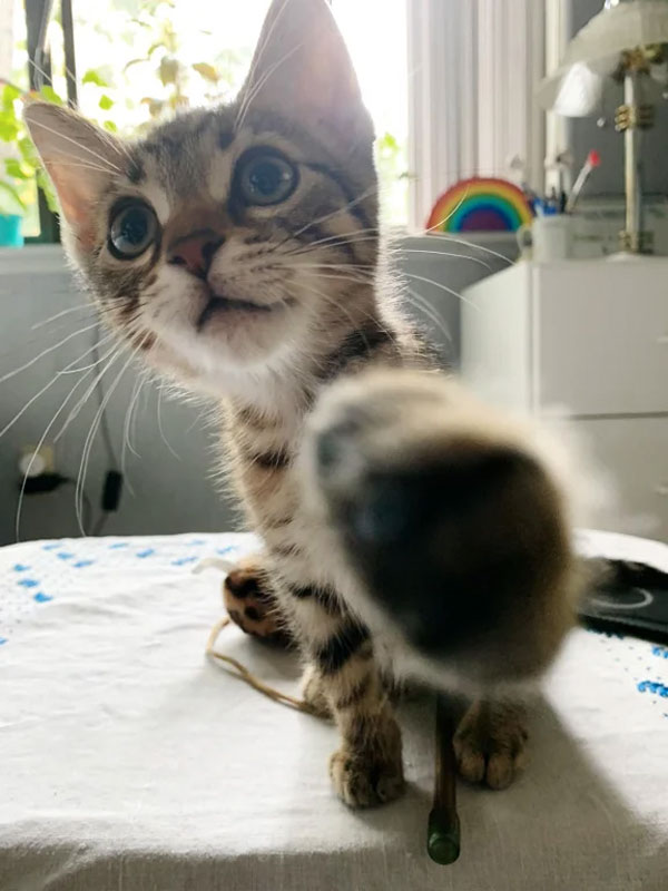 cat with paw in camera lens