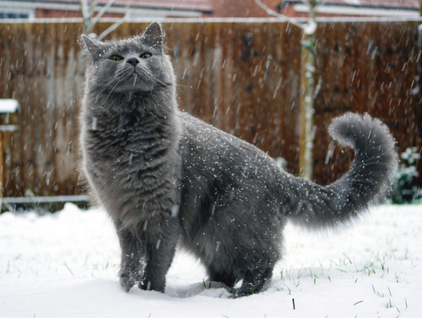 gray cat in snow storm