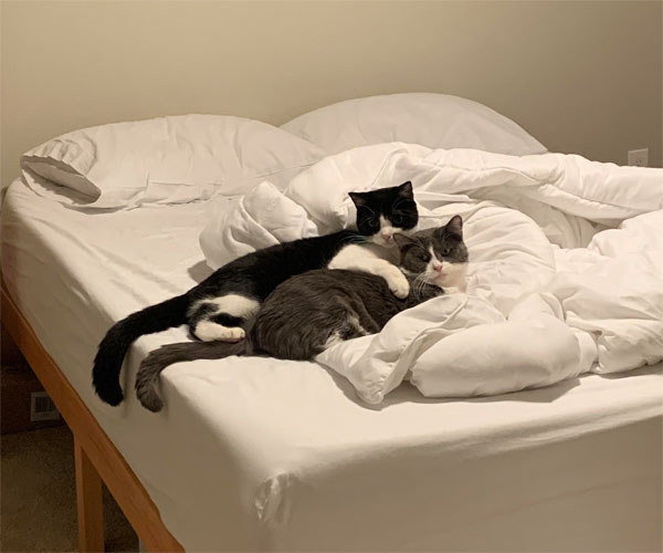 two cats cuddling in bed
